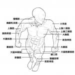 日漫官方人物全部位细节画法(资料1-3部全)