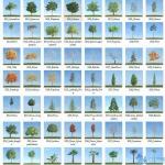 80套低面树木植物3D模型合辑